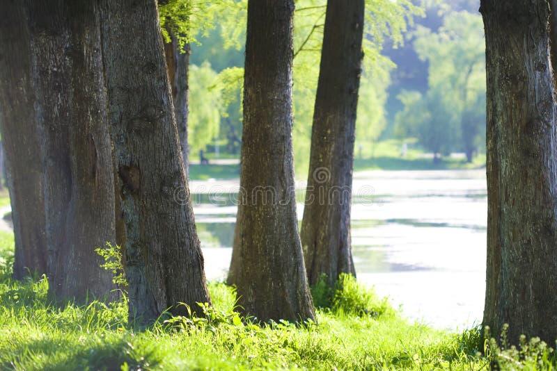 Lago e natureza imagem de stock royalty free