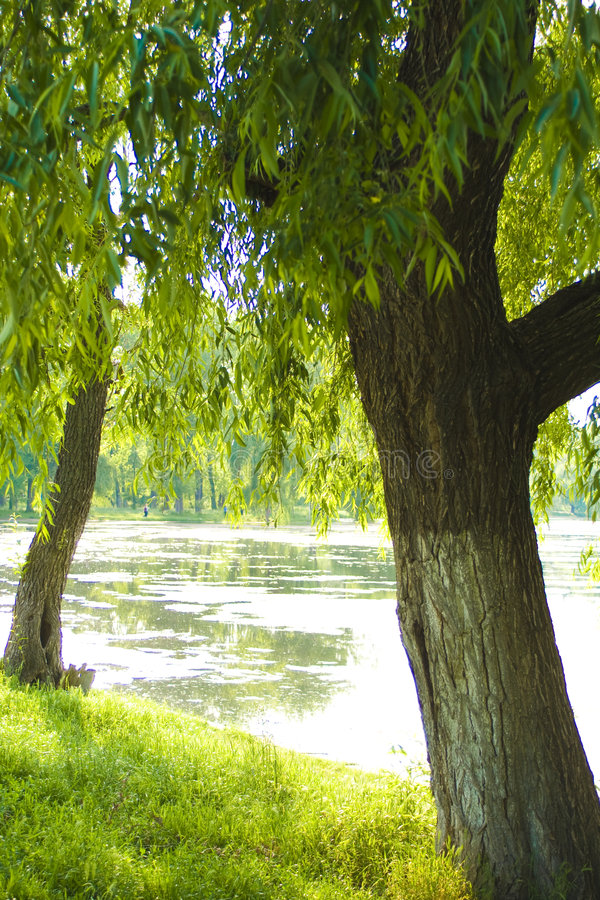 Lago e natureza fotos de stock royalty free