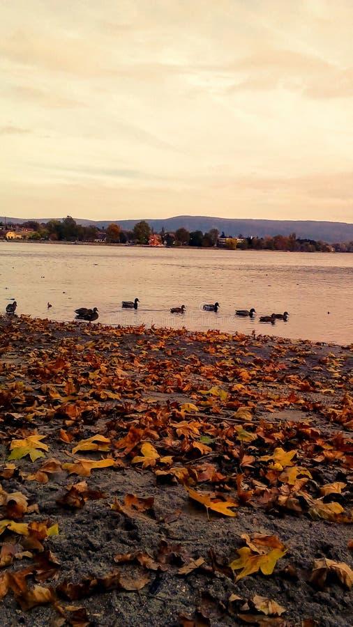 Lago e patos velhos do jarro de Autuum fotos de stock