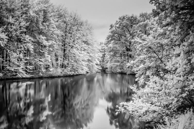 Lago ed alberi infrarossi in legno di L'aia fotografia stock