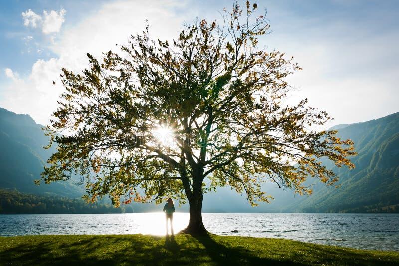 Lago ed albero immagini stock