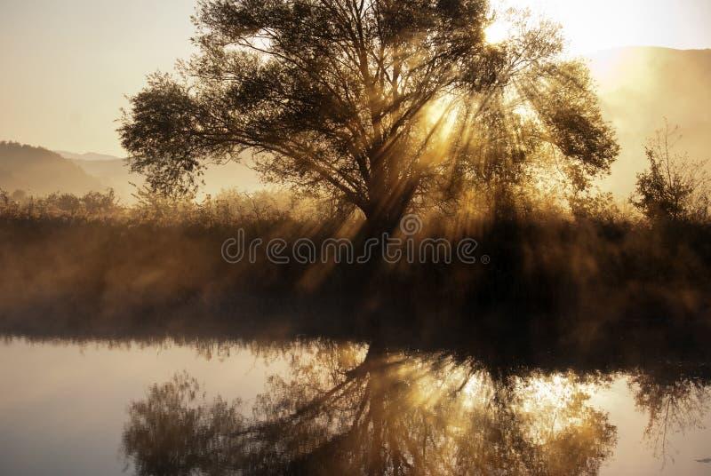 Lago ed albero immagini stock libere da diritti