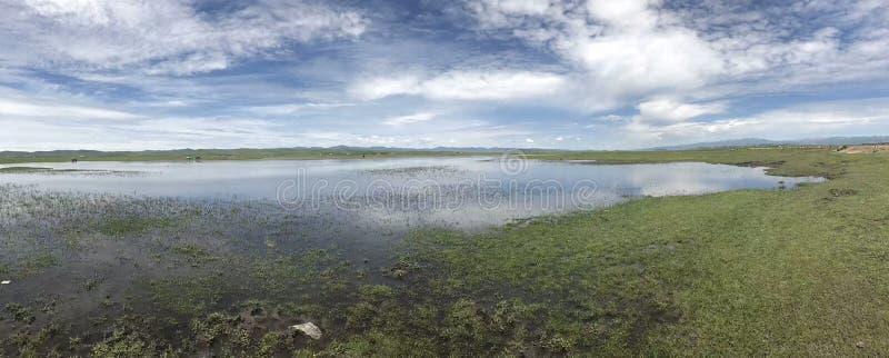 Lago ed erba di paesaggio della natura fotografie stock libere da diritti