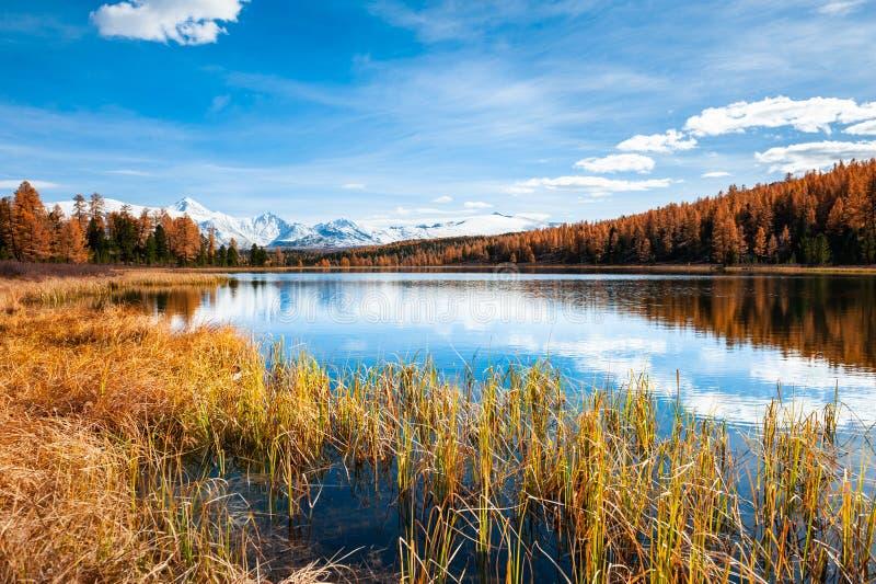 Lago em montanhas de Altai, Sib?ria Kidelu, R?ssia imagens de stock royalty free