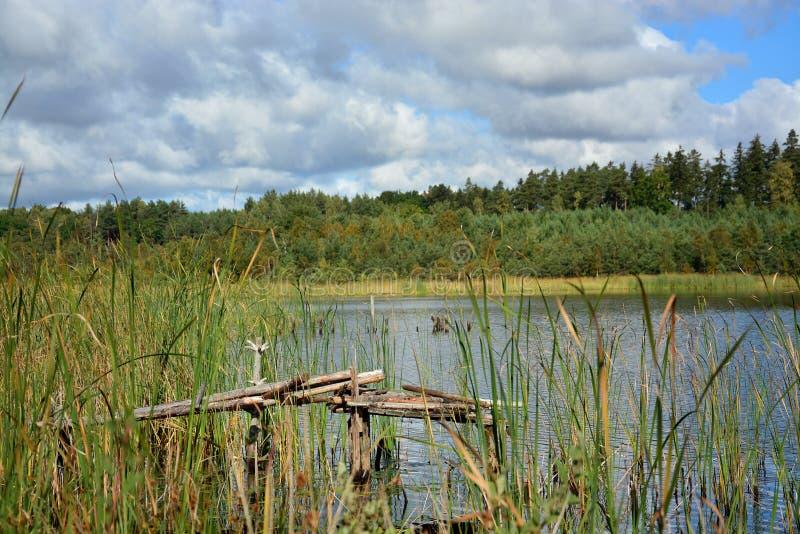 Lago em um dia de verão ensolarado fotos de stock