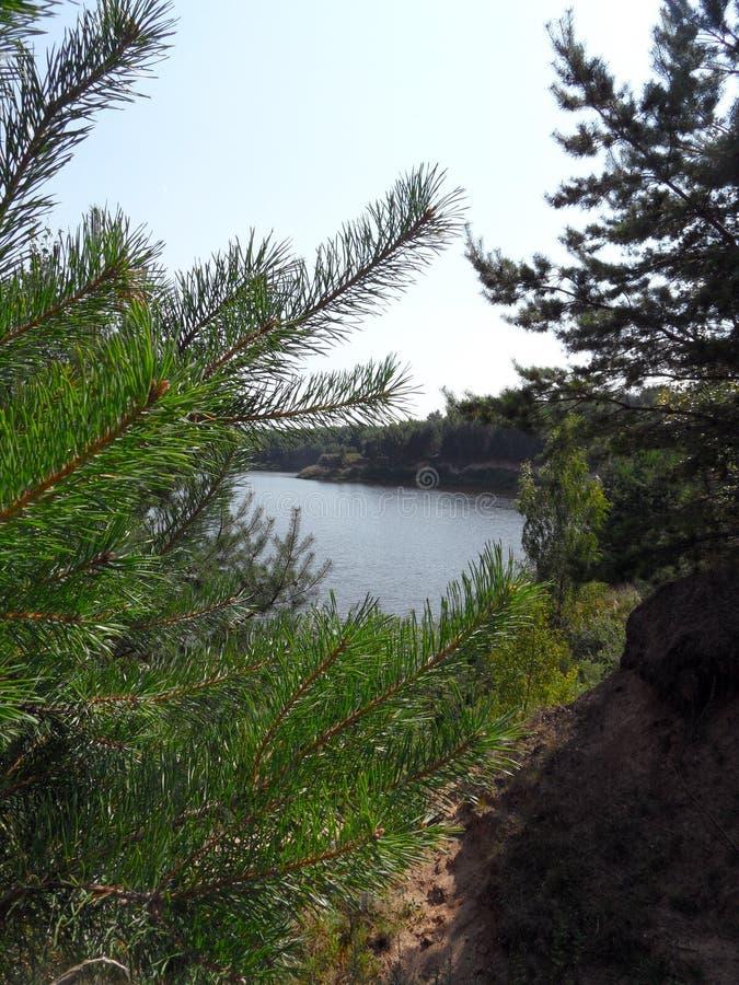 Lago em um dia de verão ensolarado vista vertical atrás das árvores imagem de stock