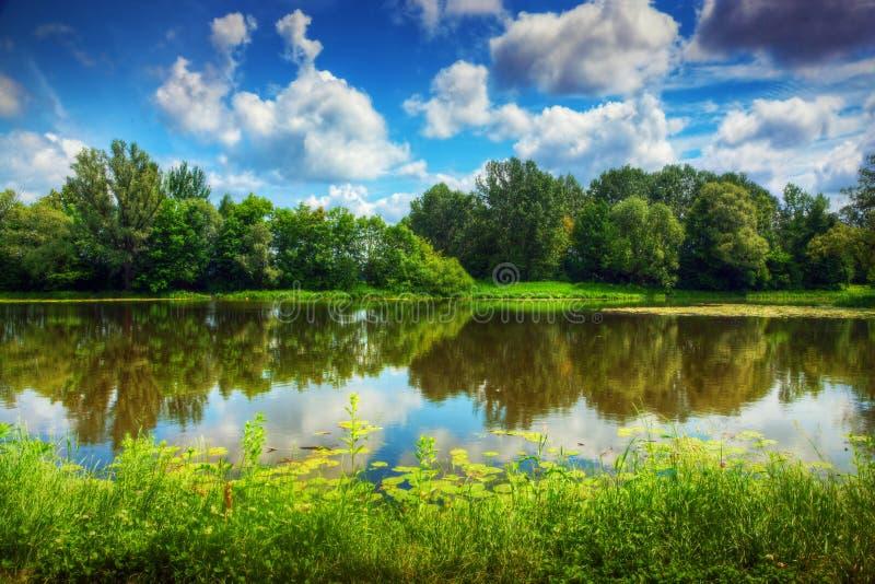 Lago em uma floresta do verão foto de stock