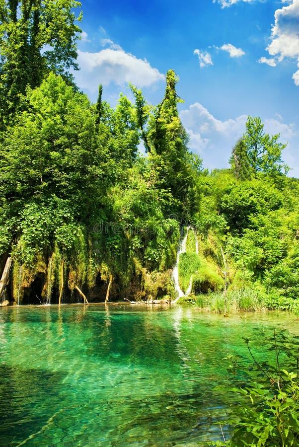 Lago en bosque fotografía de archivo libre de regalías