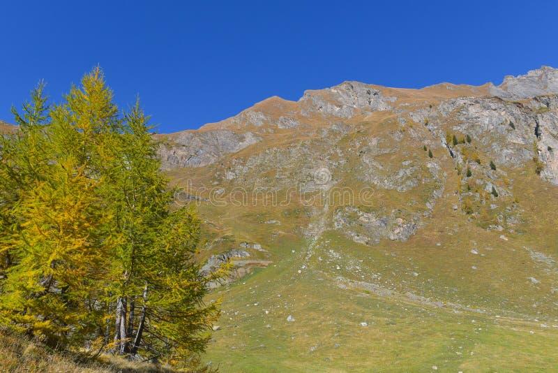 lago en el alto mountainsYellow y los alerces verdes, en las altas montañas imágenes de archivo libres de regalías