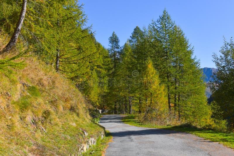 lago en el alto mountainsYellow y los alerces verdes, en el alto mountainsroad que corre a través del bosque del otoño foto de archivo