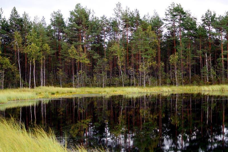 Lago en el bosque imagenes de archivo