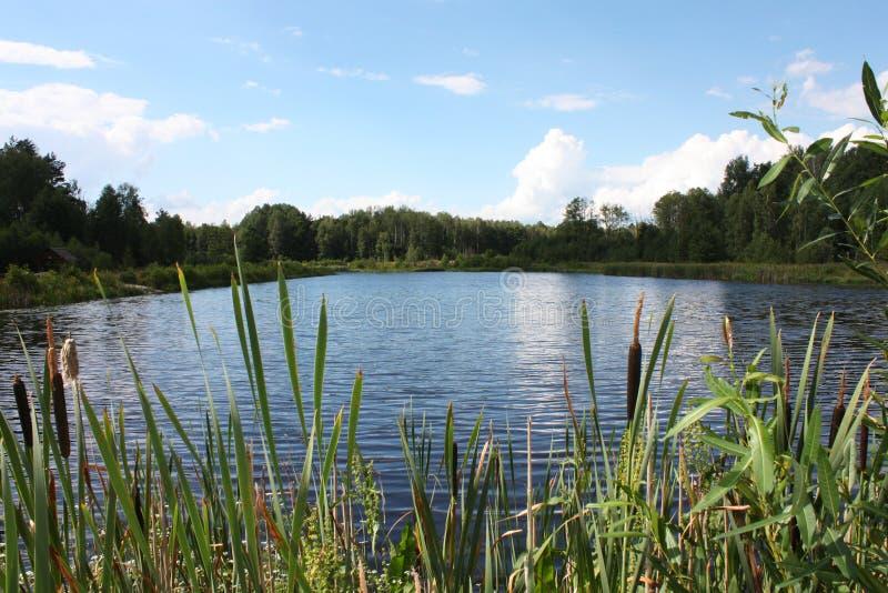 Lago en el parque nacional de Bialowieza fotos de archivo