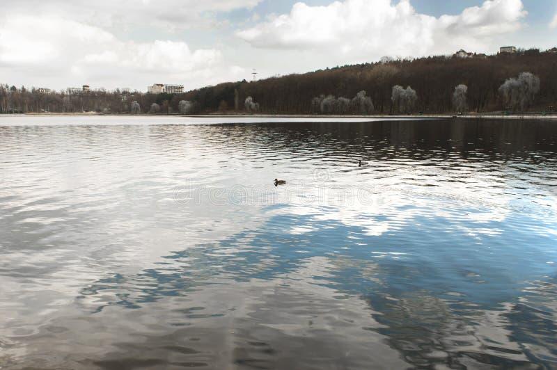 Lago en el parque en primavera temprana imágenes de archivo libres de regalías