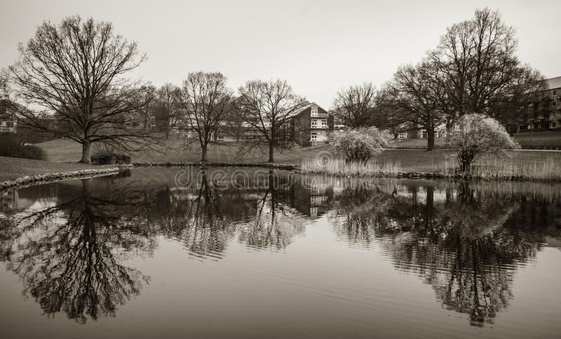 Lago en el parque, universidad de Aarhus, Dinamarca foto de archivo