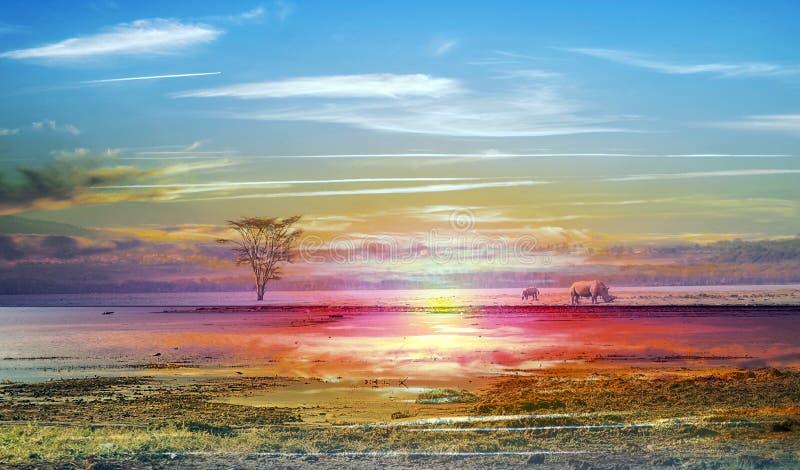 Lago en la selva imagenes de archivo