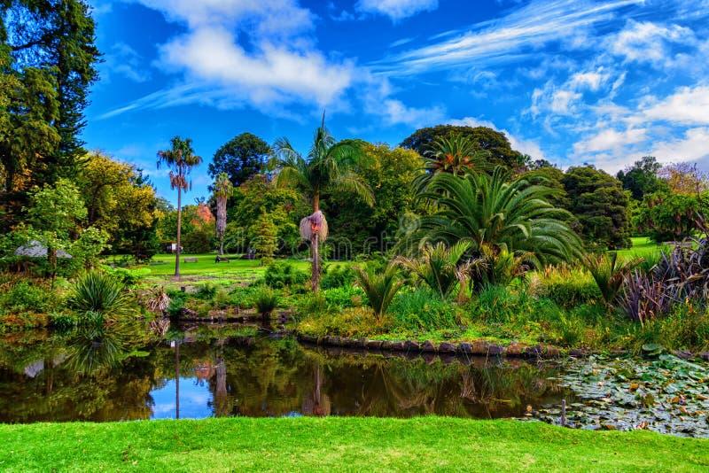 Lago en otoño, en el Jardín Botánico Real, Melbourne fotos de archivo