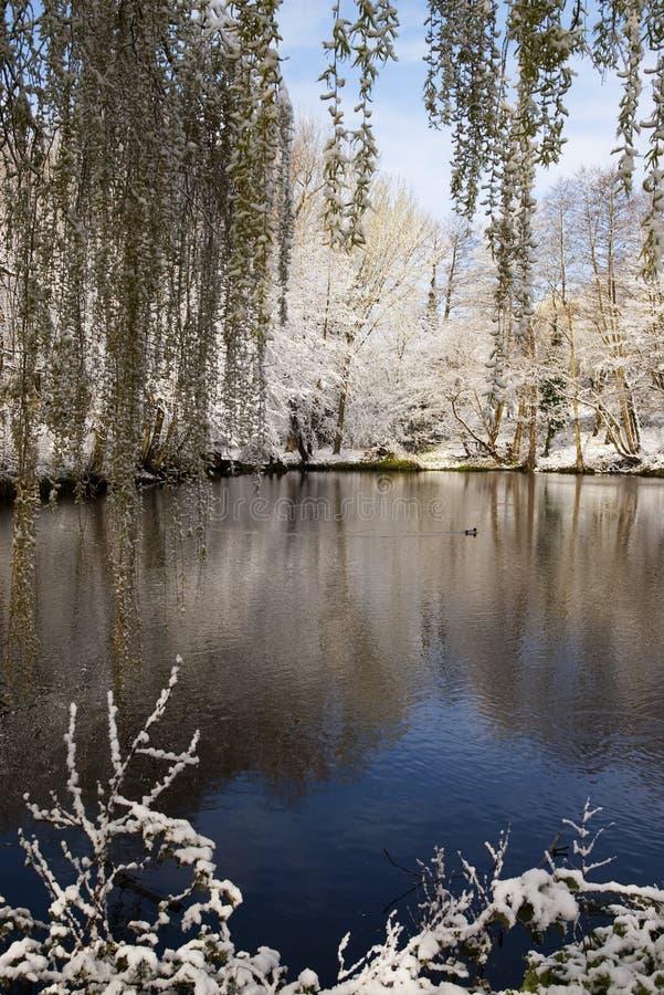 Lago en parque con nieve imagen de archivo