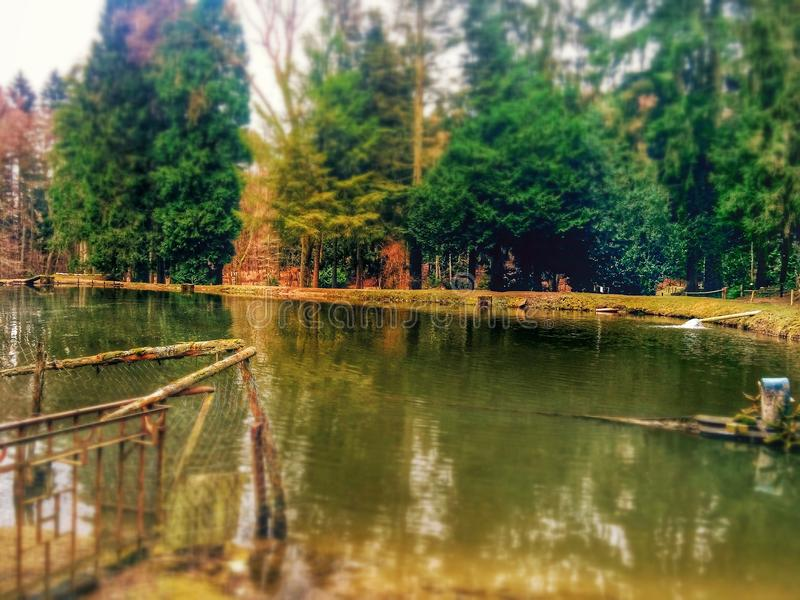 Lago en un bosque fotos de archivo