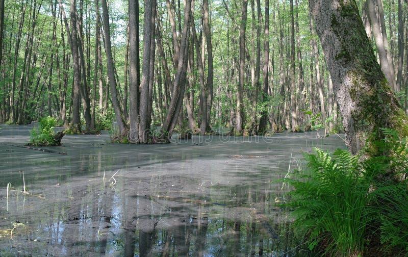 Lago en un verde de madera y árboles imagenes de archivo
