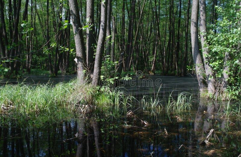 Lago en un verde de madera y árboles fotografía de archivo