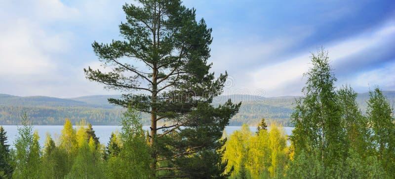 Lago escandinavo fotografia de stock royalty free