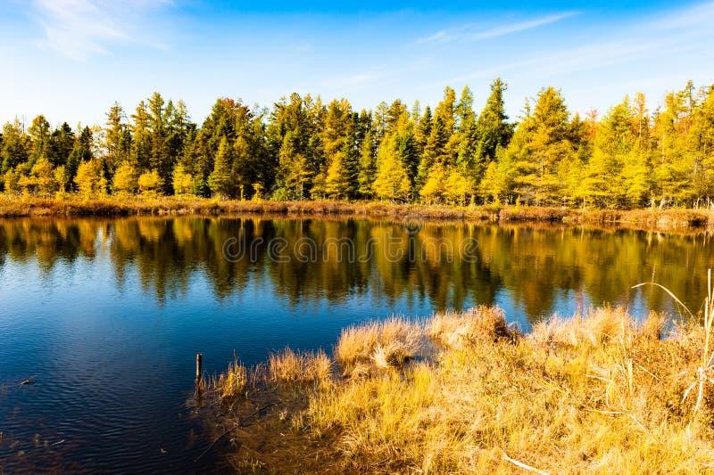 Lago fall imagens de stock