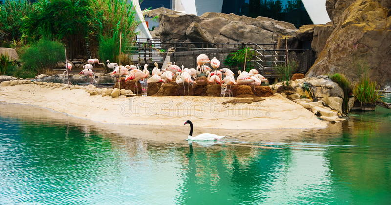 Lago flamingo imagem de stock