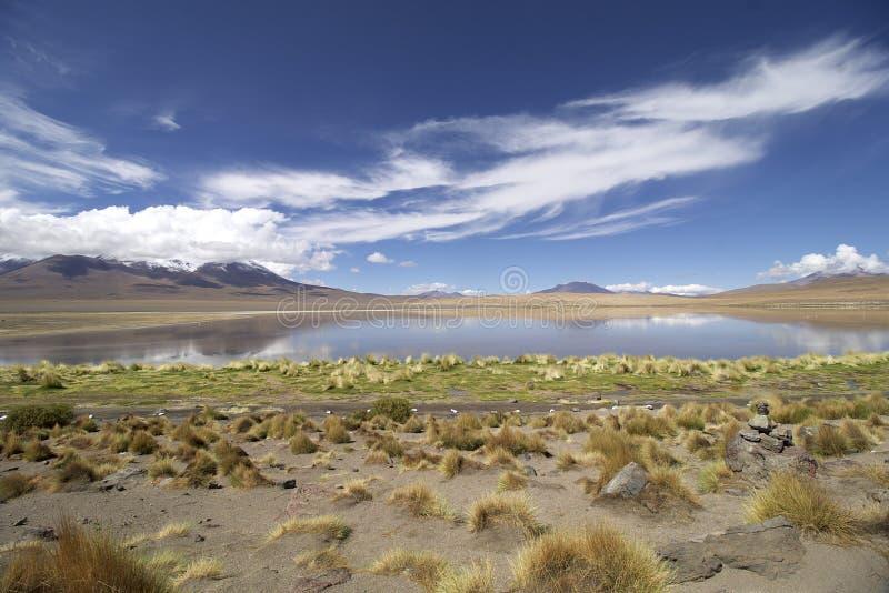 Lago flamingo em Bolívia imagem de stock royalty free