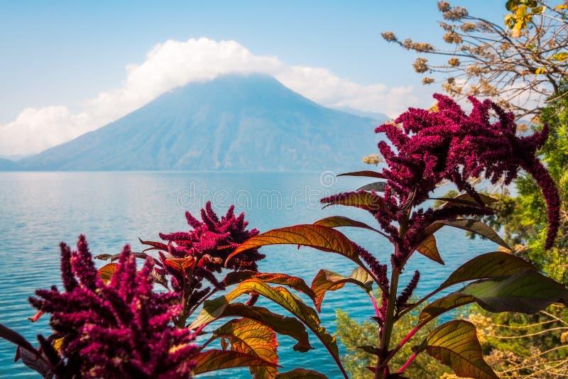 Lago, flores y volcán en Guatemala imagenes de archivo