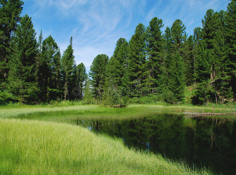 Lago forest foto de archivo