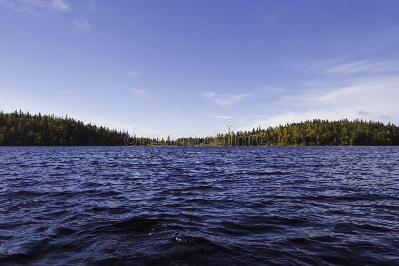 Lago forest fotos de stock