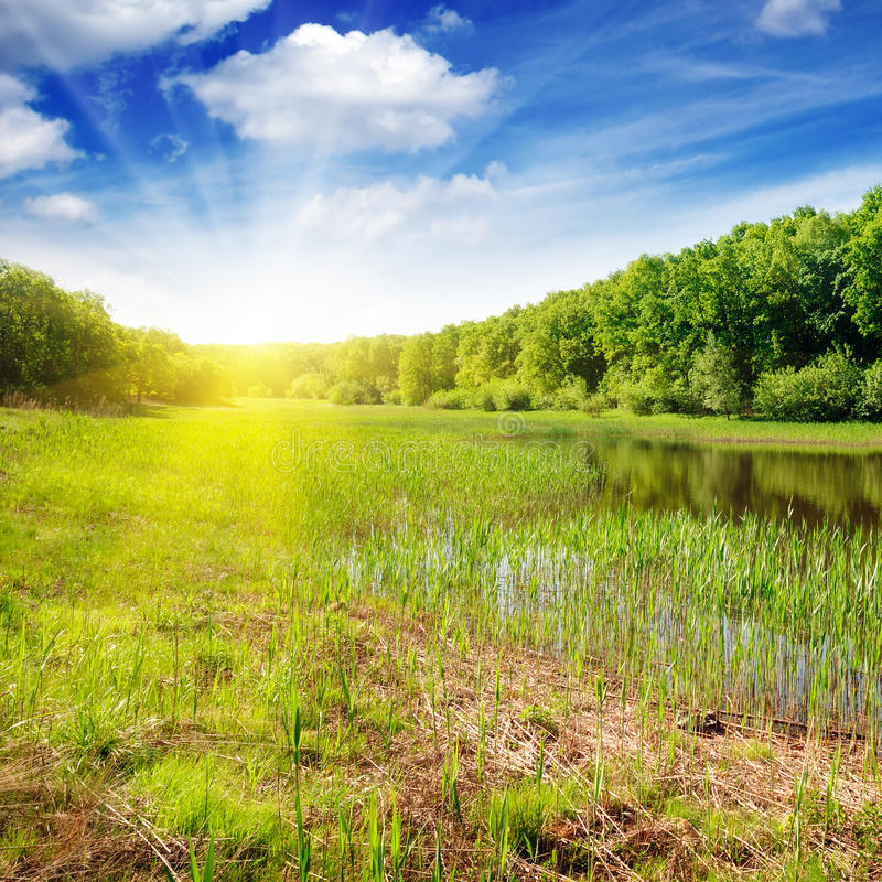 Lago forest immagine stock