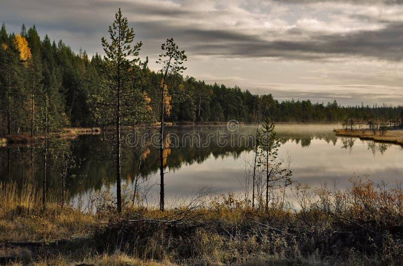 Download Lago forest foto de archivo. Imagen de cubo, pureza, madera - 7280848