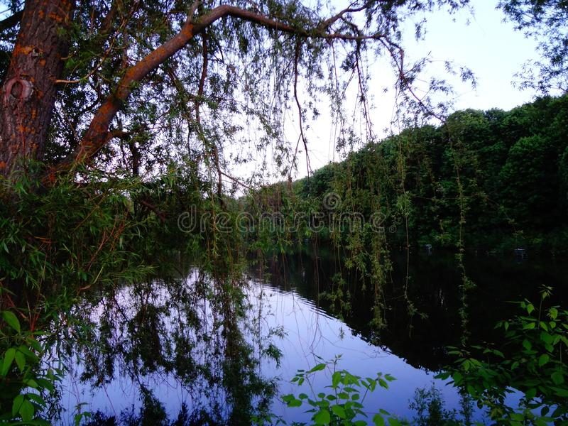 Lago forest attraverso i rami del salice fotografie stock libere da diritti