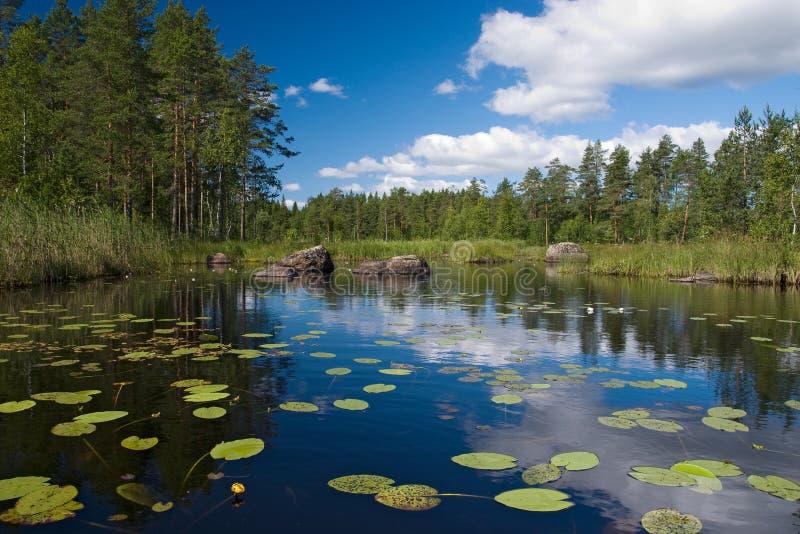 Lago forest com flores fotografia de stock royalty free