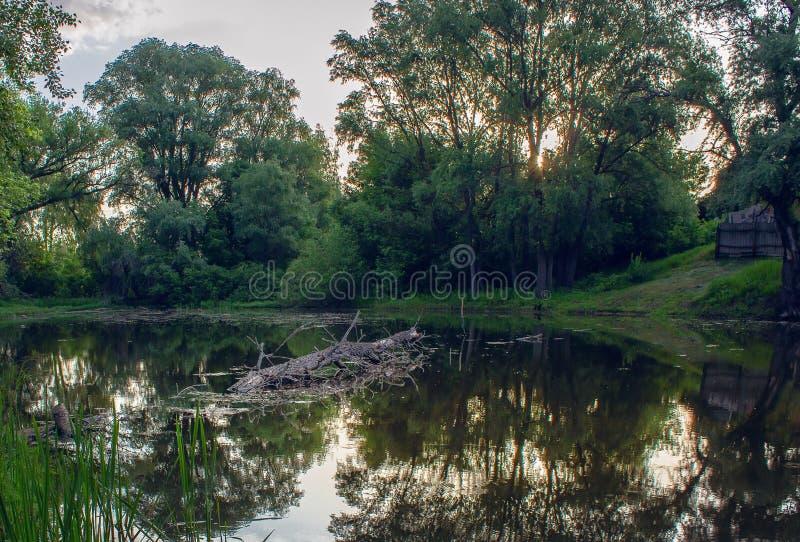 Lago forest di estate all'alba immagini stock libere da diritti