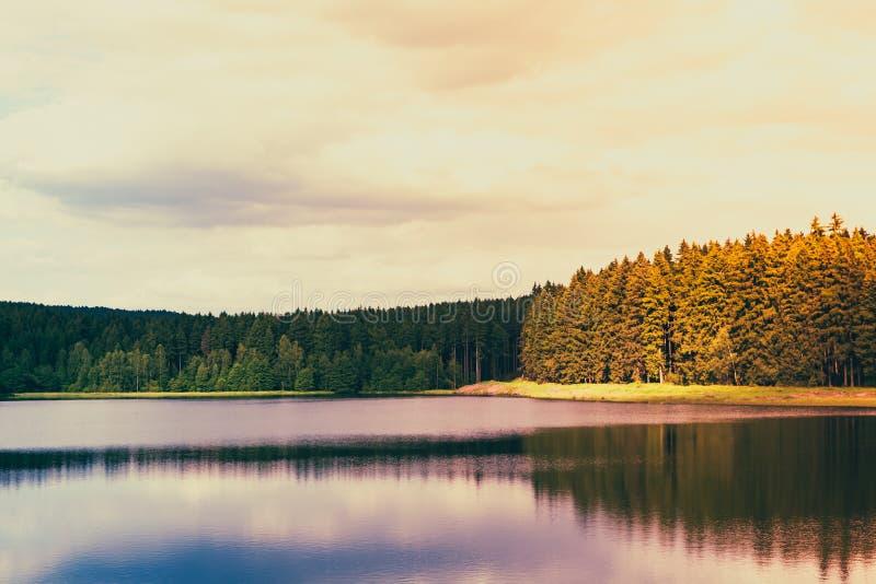 Lago forest en la luz del sol fotografía de archivo