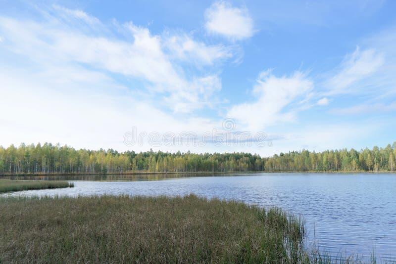 Lago forest fra gli alberi Intorno alla costa invasa con gli alberi Nell'erba invasa del carice della priorit? alta immagini stock