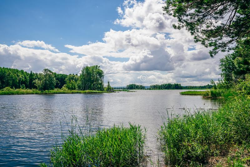 Lago forest no dia ensolarado fotografia de stock