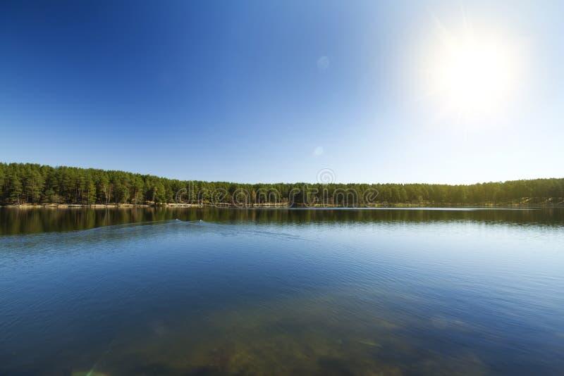 Lago forest, sorgente fotografia stock libera da diritti