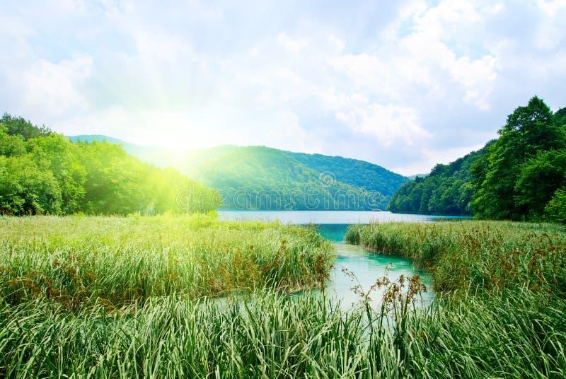 Lago in foresta immagini stock libere da diritti