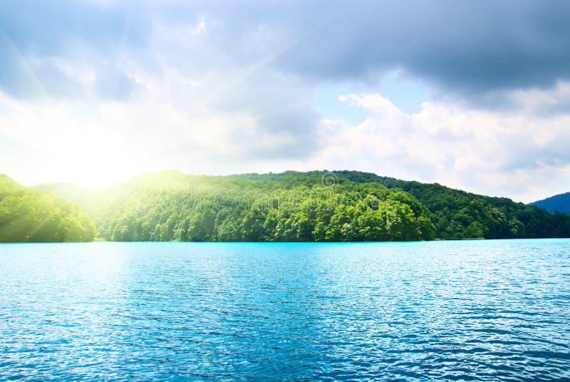 Download Lago in foresta fotografia stock. Immagine di erba, bello - 7313398