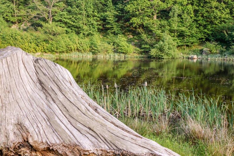 Lago in foresta con il tronco di albero immagini stock libere da diritti