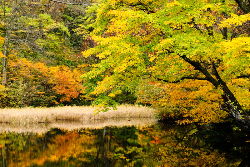 Lago in foresta profonda immagini stock libere da diritti