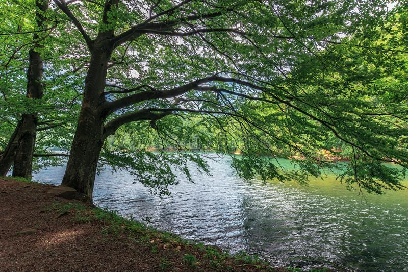 Lago fra la foresta del faggio fotografia stock