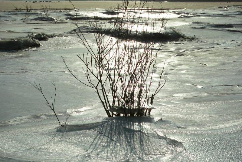 Lago freeze immagine stock libera da diritti