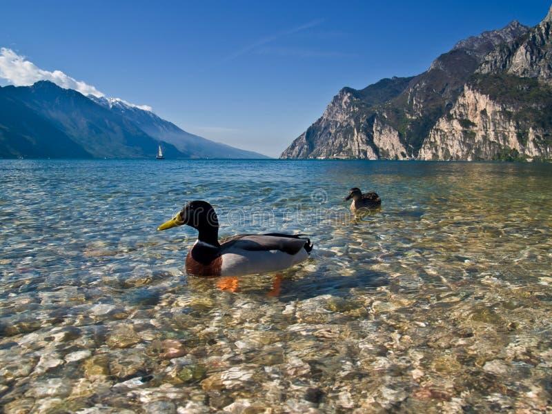 Lago Garda con un tocco di ora immagine stock