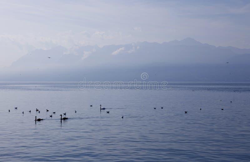 Lago geneva fotografia stock