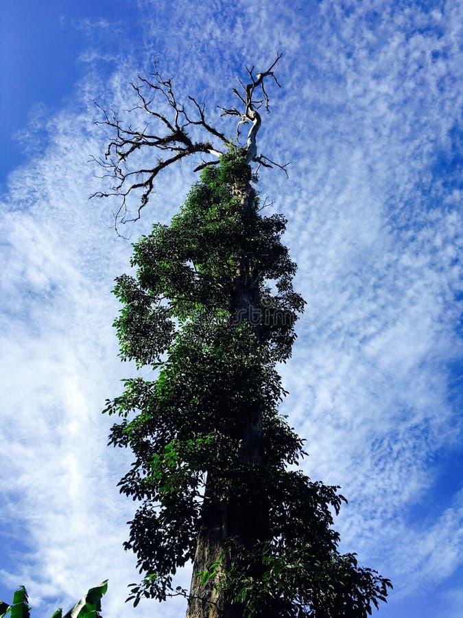 Lago gigante Holon da árvore @ imagem de stock