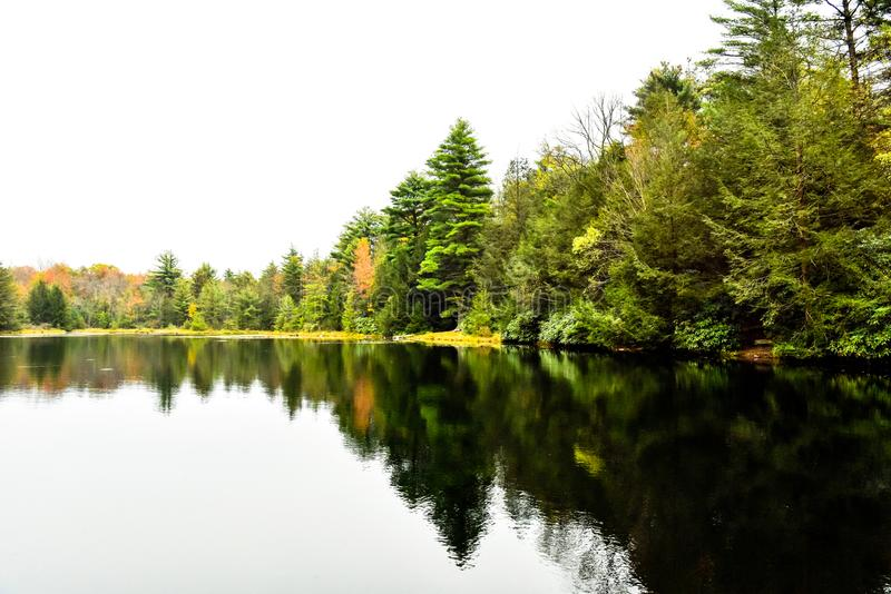 Lago grande en Front In Forest fotografía de archivo libre de regalías